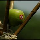 «Элементарная природа» на Пикнике