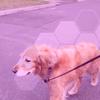 Дроны научились выгуливать собак