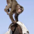 Животные приключения