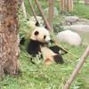 В Google Street View появились зоопарки разных стран мира