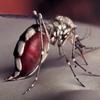 Yeah Yeah Yeahs представили новый клип Mosquito