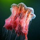 Фотография Александра Семенова: космос подводного мира