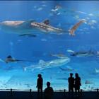 Аквариум Kuroshio Churaumi – второй по масштабам в мире