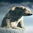 Глобальное потепление возможное будущее