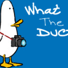 What the Duck! Тяжелые трудовые будни фотографа