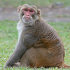 Учёные обучили обезьян математике