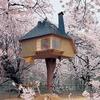 В Японии построили домик на дереве для любования сакурой