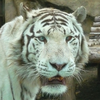 Google помогает охранять вымирающих животных