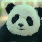 "Panda! Не говори Панде ""нет""!"