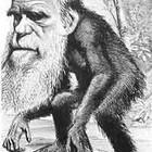 Эволюция и юмор