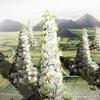 Китайский архитектор представил концепцию небоскрёба-деревни
