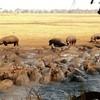 Бегемотово царство. Танзания