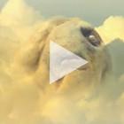 Клип дня: Yeasayer