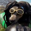 Прыжок собаки с парашютом засняли на GoPro