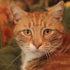 BBC узнали о тайной жизни кошек с помощью GPS