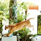 LG и AR Door переносят зрителей из дома в джунгли