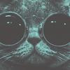 Фотоприложение Snapcat позволяет котам снимать себя на телефон