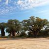Остров баобабов в Ботсване