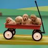 В рекламе корма представили слаженный «собачий механизм»