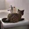 Студентка опубликовала реалистичную анимацию сушки шерсти кота