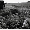 Современные мастера фотографии. Larry Towell