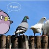 Какого цвета птица удачи?