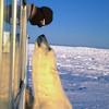Журнал Wired составил топ арктических фотографий