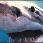 Если Акулы Станут Людьми