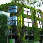 Диалог с природой: вертикальные сады