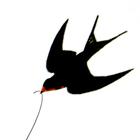 Десять пластинок с крыльями