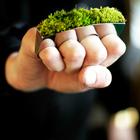 Украшения с растениями Growing Jewelry