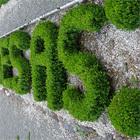 Сад типографческих наслаждений