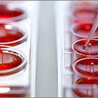 «Доноры крови – здоровая нация»