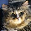 Исследование: владельцы кошек умнее владельцев собак