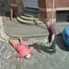 В Google Street View нашли фальшивое убийство