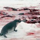STOP человеческой жестокости и глупости