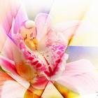 Время цветения