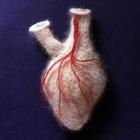 Шерстяная анатомия или колбасные фигурки