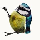 Birds Of Claire
