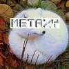Новая музыка: METAXY