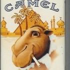 Уроки Camel