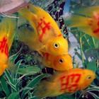 Татуированные рыбы