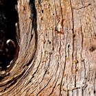 Treefilia