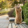 Кошки- лучшие целители