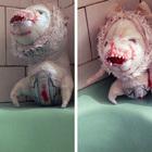 Куклы Cistas