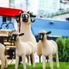 Нью-йоркскую заправку превратили в пастбище для овец