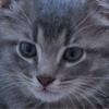 На главной странице сайта Chicago Tribune случайно поместили котёнка