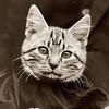 Фотографии с животными, начало прошлого века