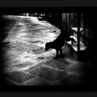 Джакомо Брунелли и «другие» животные
