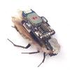 RoboRoach позволяет создать управляемого таракана-киборга